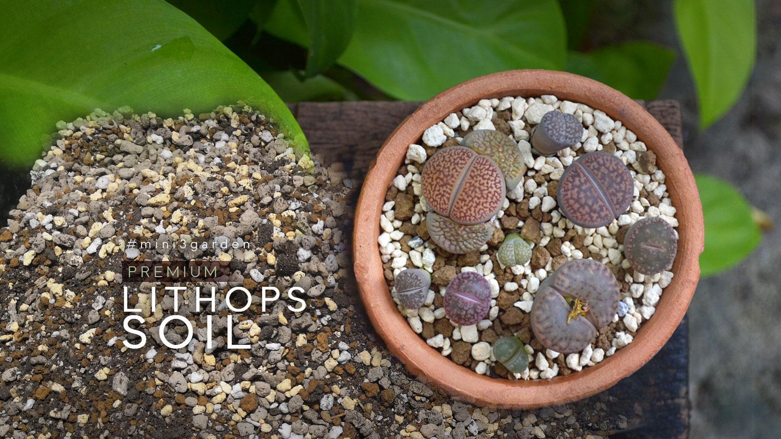lithops_soil.jpg