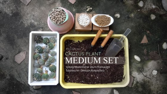 medium-set.jpg