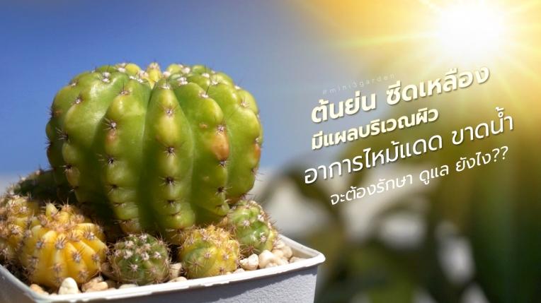cactus-burn