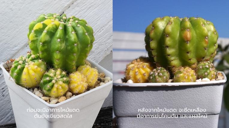 cactus-burn5.jpg