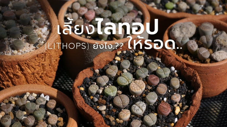 how-to-lithops-care-1